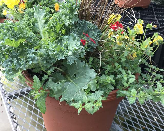 2020 September Saturdays presents: How to create a fall patio planter.
