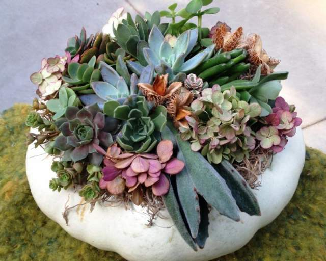 2020 September Saturdays presents: How to create a succulent pumpkin centerpiece!