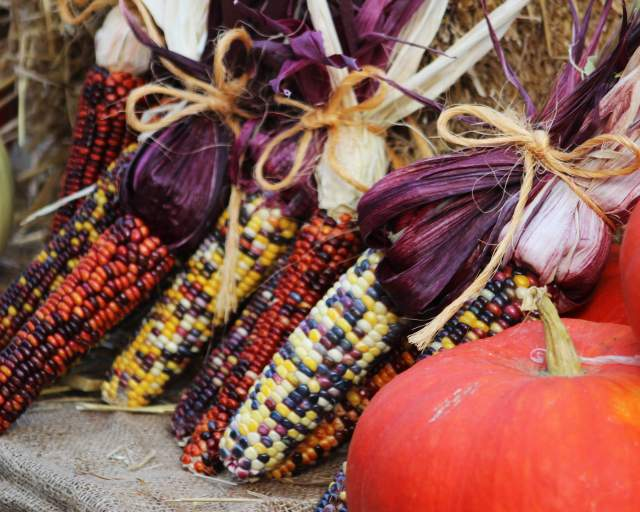 11th Annual Fall Garden Festival