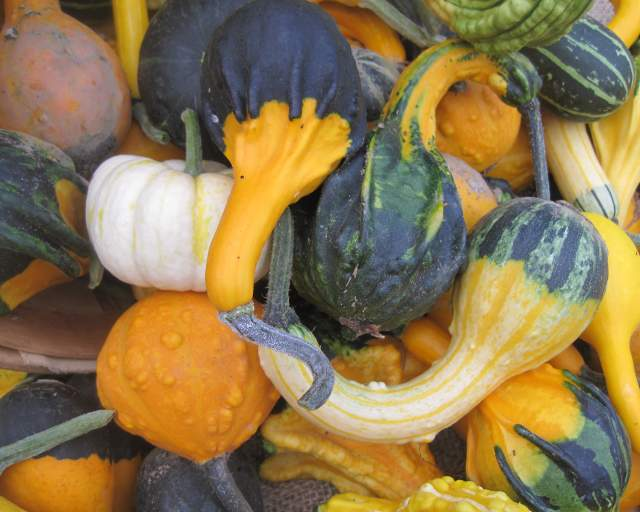 Gourds go beyond Thanksgiving
